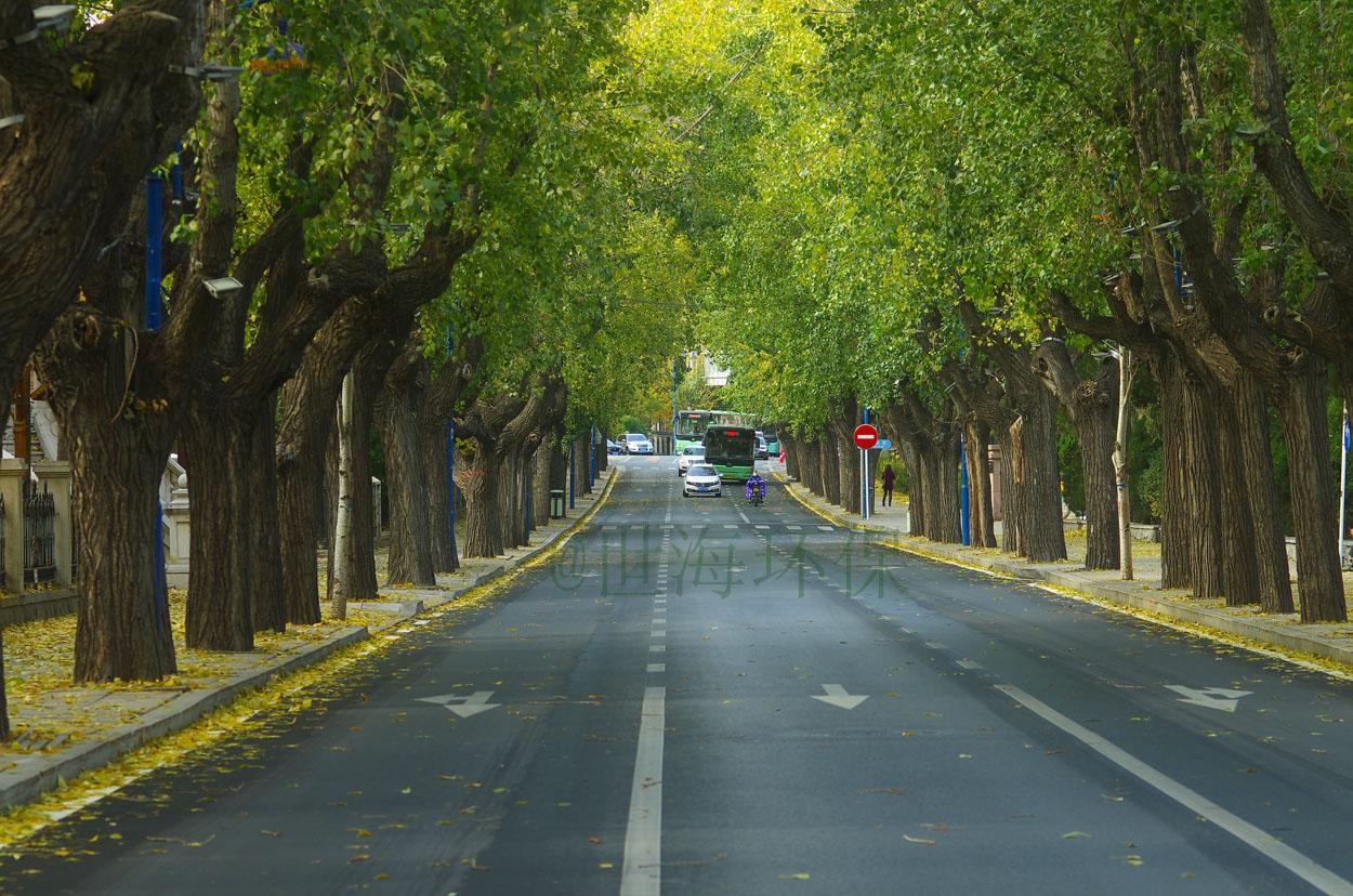 走在秋天的大连街上002=.jpg