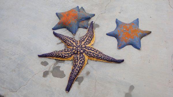 美丽的海星