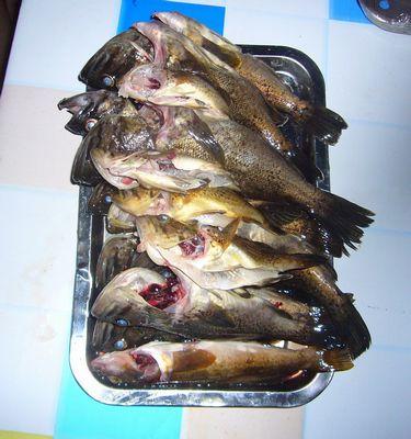 同事们钓到的黑鱼