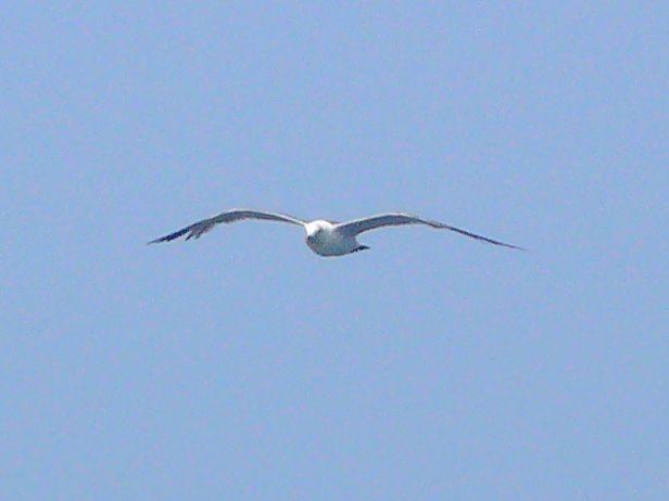 海鸥在船边盘旋