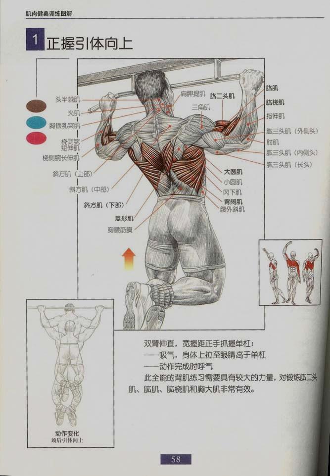 健身图片 新手必看 每日健身 大连论坛